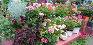 jardinerie-st-projet