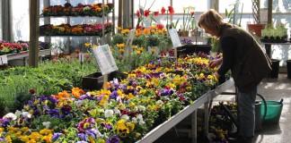 Les jardineries Dupoirier vous donneront envie d'aménager votre potager