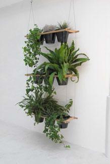 Un bar à plantes chez soi - credits photos : editioncompagnie.fr